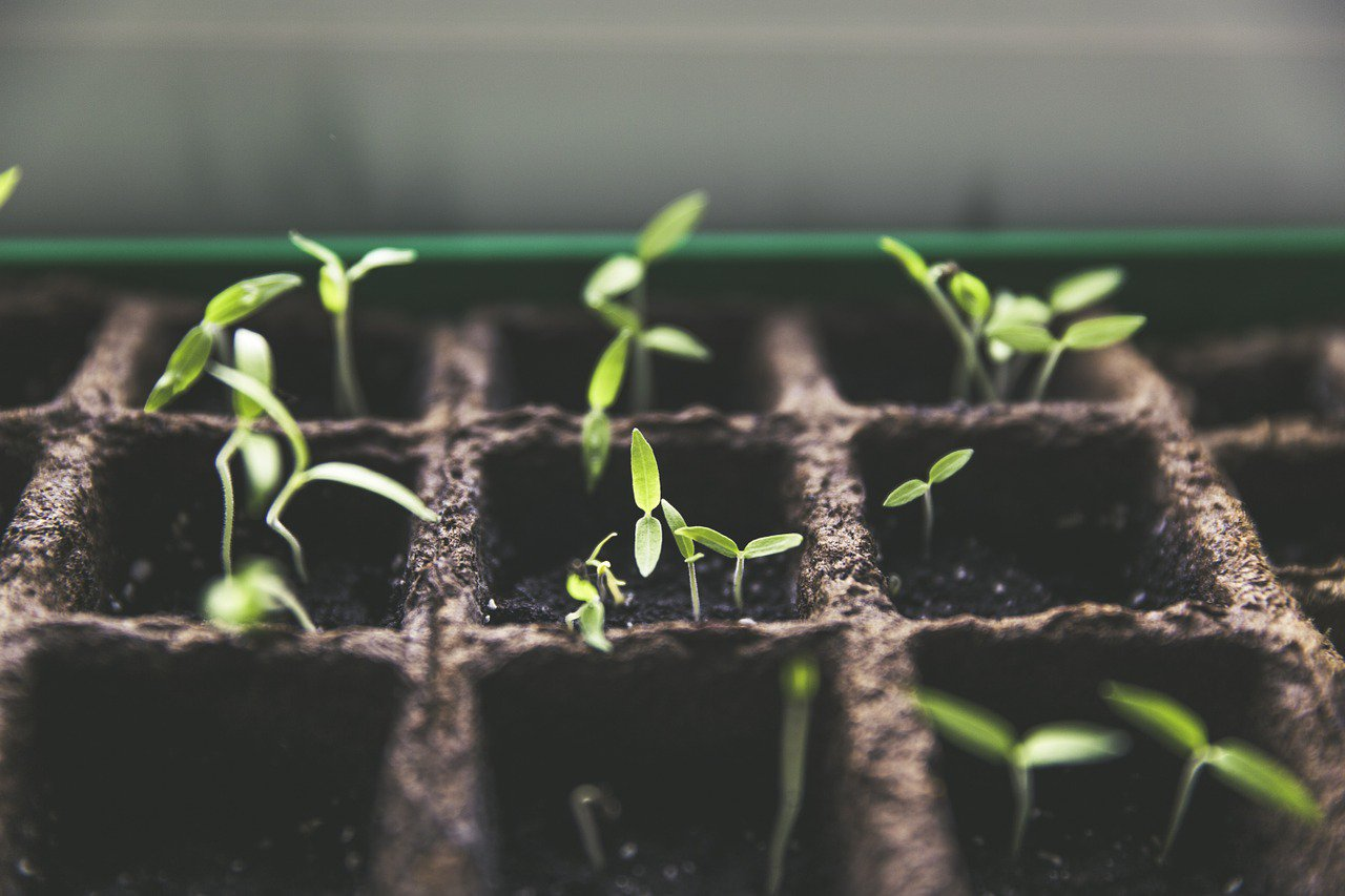 Pflanze_Anbau_Gardening